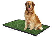 Dog Training & Behavior